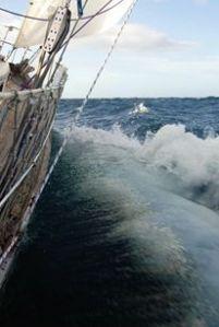 sailing MOMO