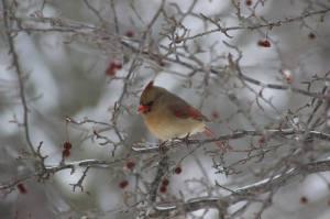 Jessica Bell bird